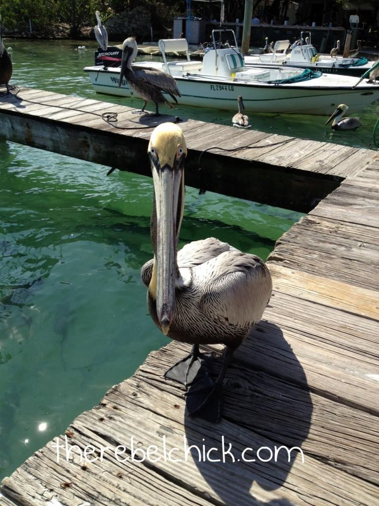 Robbie's Tarpon Feeding, Islamorada Florida Keys