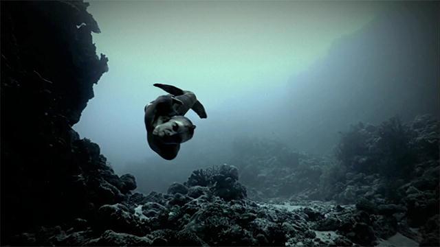 mermaids the new evidence mermaid body found