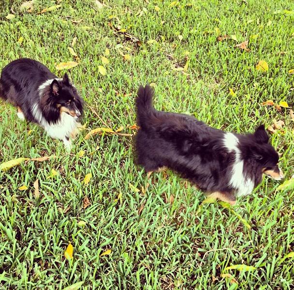 tagg pet tracker 5